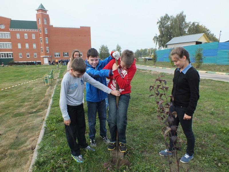 Областной субботник «Посади своё дерево»